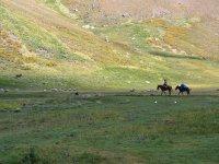 Horse landscapes