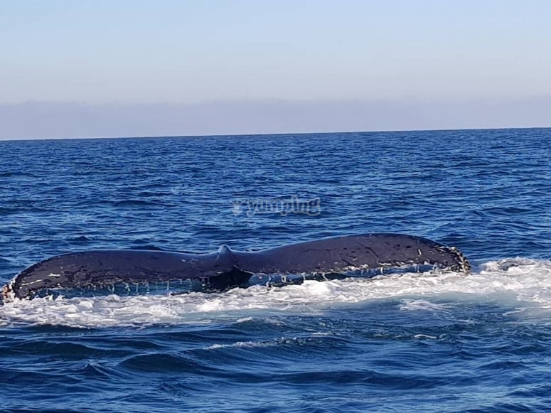 Conociendo las ballenas