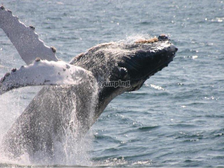 Observa de cerca a este bello mamifero acuatico