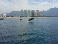 Whale watching in Jalisco