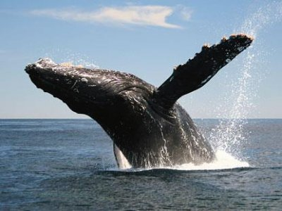 BC Tours Whale Watching