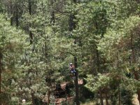 Zip-lines in the forest