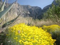 Naturaleza en Nuevo Leon