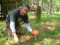 Mushrooms and interpreting