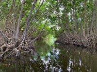 Ruta por los manglares