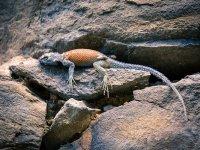 fauna of huasca