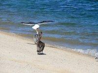 Al pie de playa