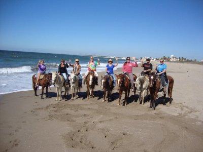 Gingers Horses