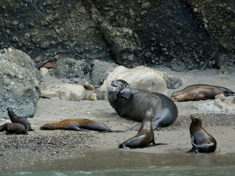 Contempla a las focas y lobos marinos que habitan en la isla