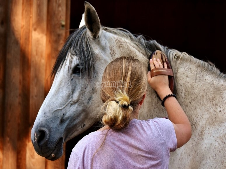 Treat the horse with love