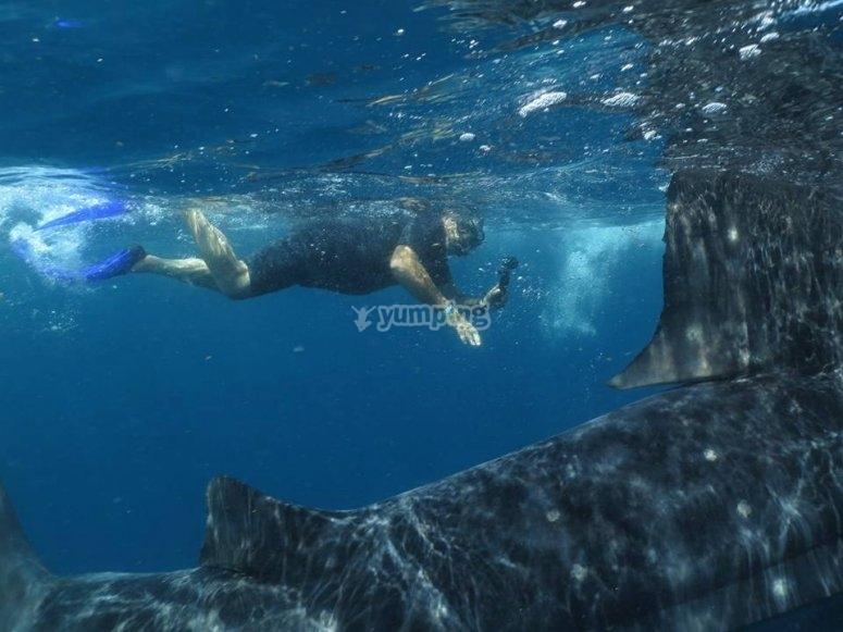nado bajo el mar.