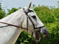 Disfruta de la aventura a caballo