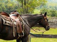 Disfruta de la ruta a caballo
