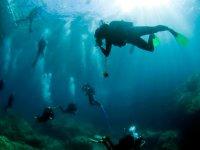 Bajo las maravillas del mar
