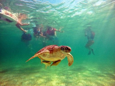 Snorkel and cenotes in Playa del Carmen