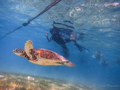 Snorkel with turtles + Cenotes in Riviera Maya