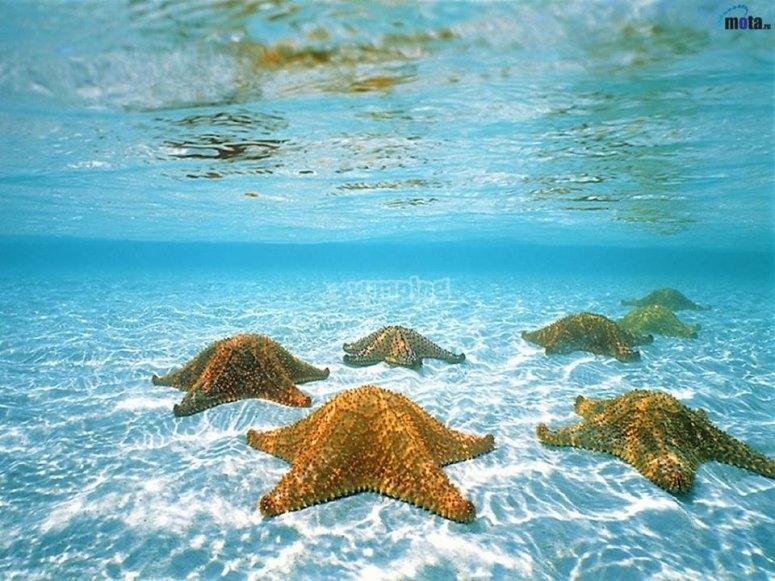 Maya sea