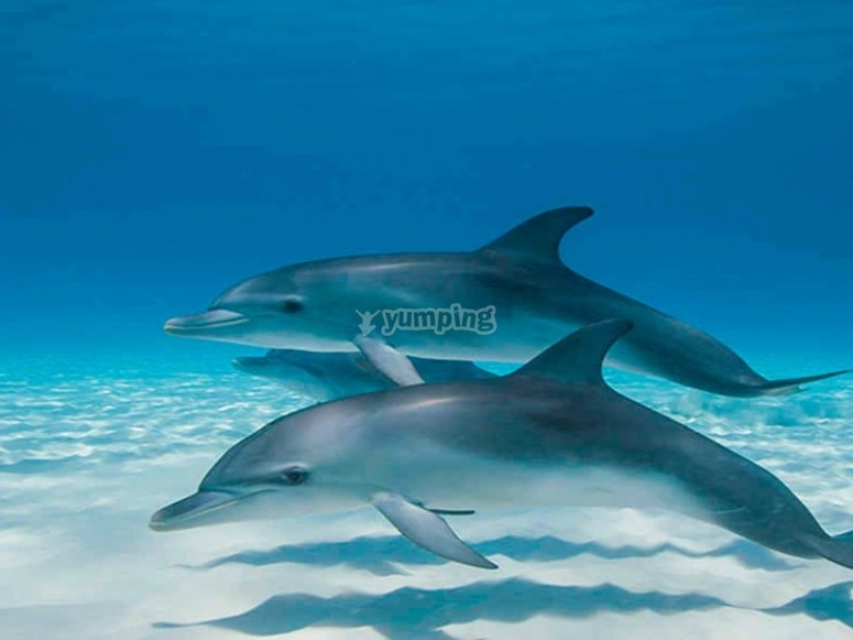 A beautiful dolphin