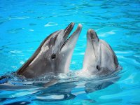 Experience with dolphins in Riviera Maya
