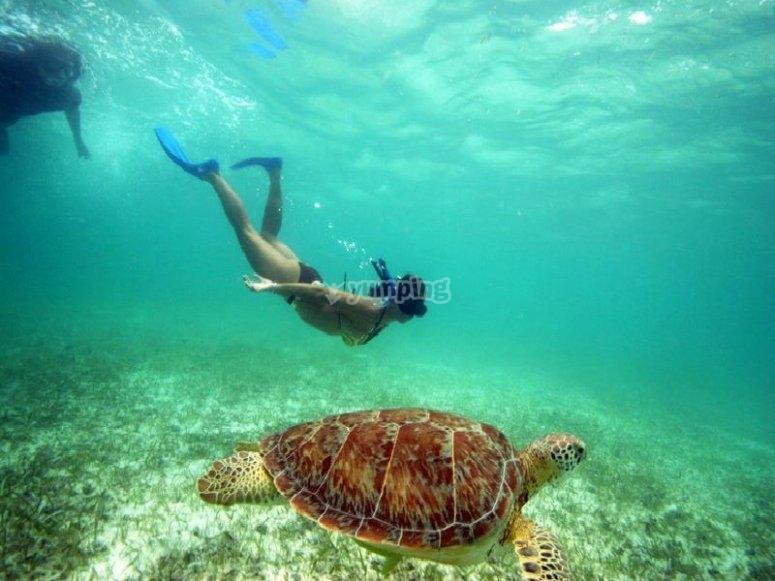 snorkel en INAH