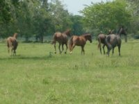 Our horses
