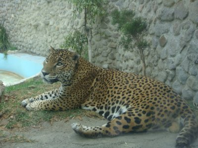 Zoo Parque Loro