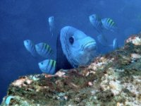 Fish in snorkeling