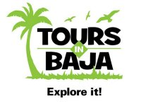 Tours in Baja Nado con Tiburón Ballena
