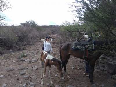 Donkey Ride for Kids El Salto, 3-4 hours