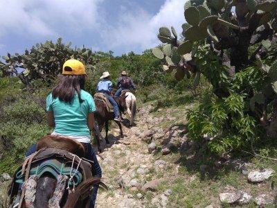 Donkey ride in Barranca de la Cazuela
