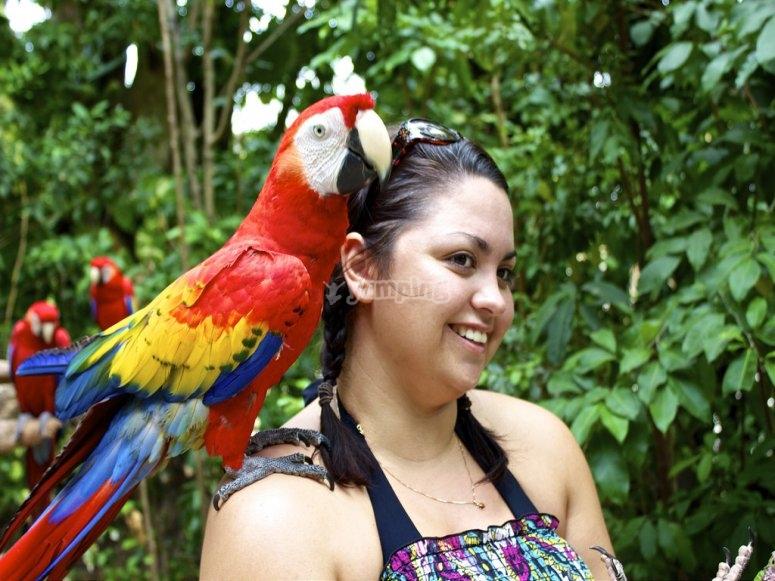 con el papagayo