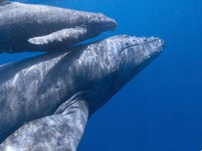 Choya Tours Whale Watching