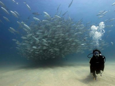 Diving Immersion for Certifications in Cabo Pulmo