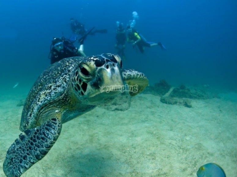 Descubre la maravillosa fauna marina de Cabo Pulmo
