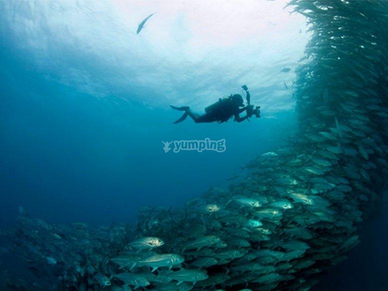 Espectaculares bancos de peces