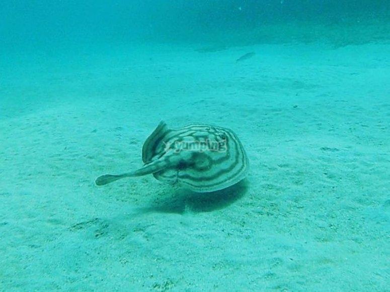 Sorpresas bajo el agua