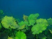 Jardines marinos