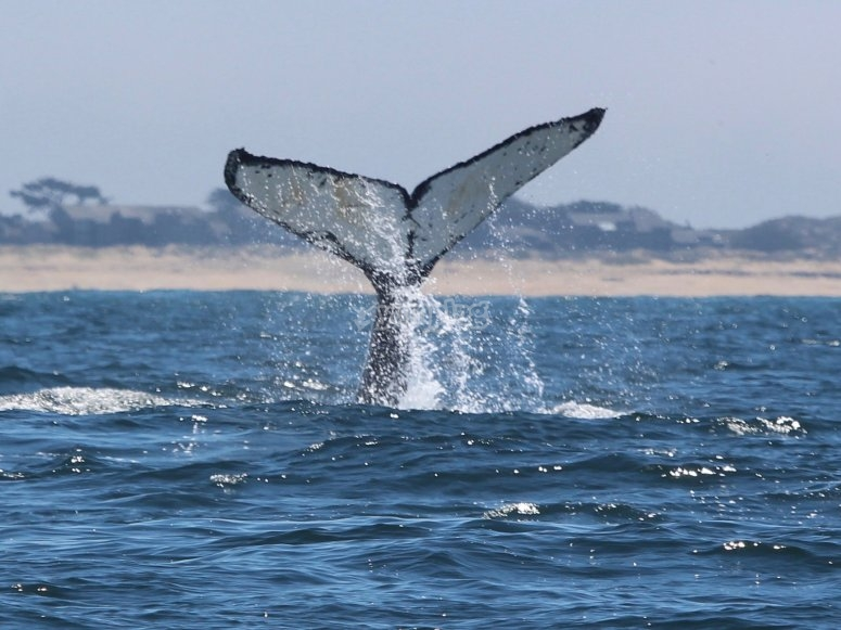nayarit animales marinos