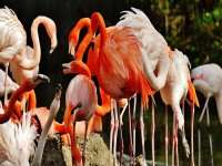 Meet the flamingos