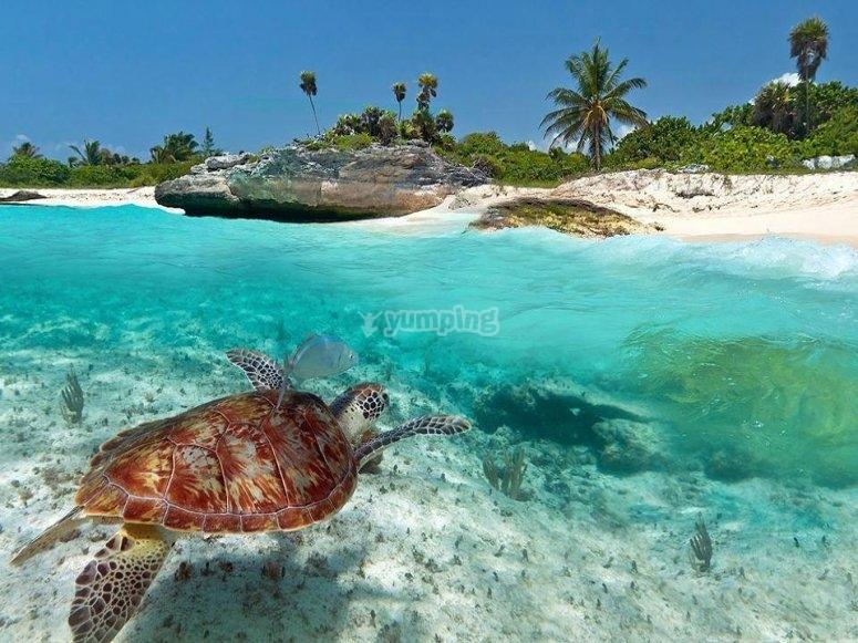 nada con tortugas
