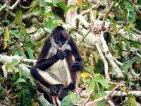 isla del mono arana