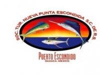 Nueva Punta Escondida Whale Watching