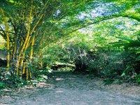 Jungle trails