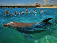 Parque y nado con delfines Xel-Há  precio adulto
