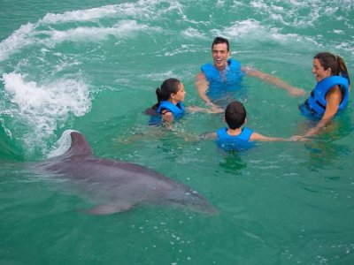 Park and swim with dolphins in Xel-Há price for children