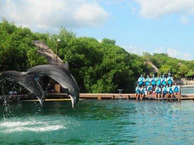Swim with dolphins in Xel-Há 3 hours