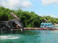 Swimming with dolphins in Xel-Há 3 hours