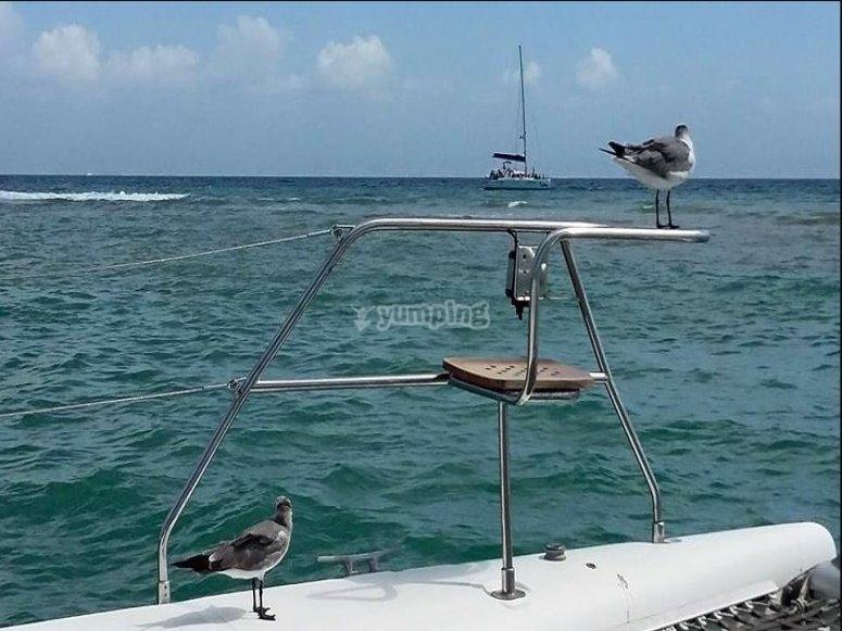 Sailboat trip Quintana Roo