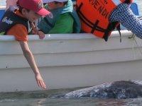 Las ballenas se sienten atraídas por los niños
