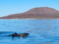 Solemos tener acompañantes durante nuestros recorridos a ver a las ballenas